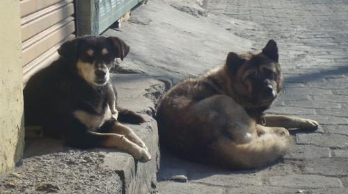 Congreso aprueba sanciones para quienes abusen de los animales