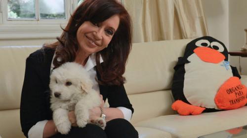 """Simón, el nuevo perro """"chavista"""" de la presidenta argentina"""