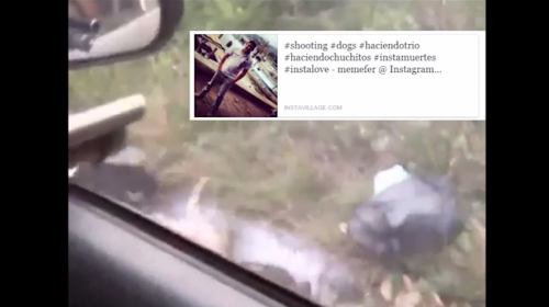 Video de guatemalteco que mata perros causa indignación en Internet