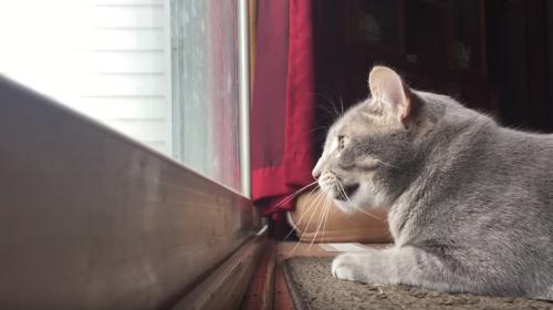 El video de un gato que tiene millones de visitas y nadie sabe por qué