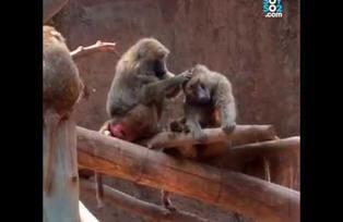 Zoológico La Aurora planea la eliminación de jaulas y barreras para los animales
