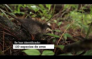 Reserva Natural, una de las más importantes en Guatemala