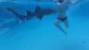 Impactante video de mujer atacada por tiburón durante su luna de miel