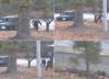 El sorprendente pedido del soldado norcoreano que desertó