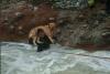 """La historia de """"Estrellita"""", la perrita que fue rescatada en un río"""