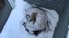 El perrito ciego y enfermo que sobrevivió cinco días bajo la nieve