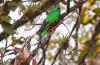 """Historia de una fotografía: """"Ver volar al quetzal es increíble"""""""