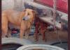 La casa del horror para perros: sospechan de venta de carne canina