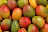 Reto visual: ¿ves un loro bebé escondido entre los mangos?